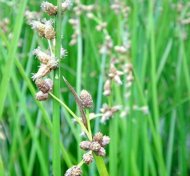 山の上にはえる草 2